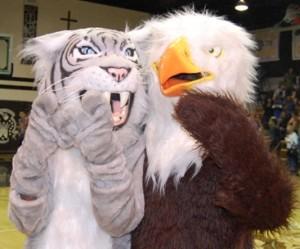 Lions,Wildcats